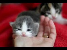 Best Little Cute Kittens -TOP 10  Cute Cats Video Compilation NEW The Mo... https://www.youtube.com/watch?v=mSoUgjfSrkw&list=PLC_HjotBFMpPFfz218Y24vZzXmj3UxawS