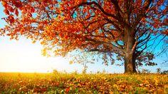 ayurvedic-eating-fall.x45171.jpg (1066×600)