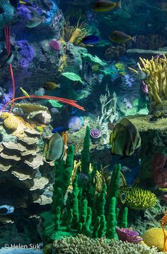 RIPLEY'S AQUARIUM OF CANADA: TIPS FOR YOUR VISIT by Not Without My Passport