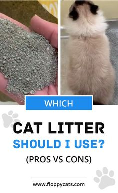 If you're thinking of getting a new cat or already have one and aren't sure which litter is best for them, check out your options. Learn the different kinds of cat litter and what the pros and cons of using litter are. #catlitter #newcat #cathacks #catcare Ragdoll Kittens For Sale, Ragdoll Cats, Ragdoll Cat Colors, Hiding Cat Litter Box, Cute Cat Names, Cat Behavior Problems, Types Of Cats, Cat Urine