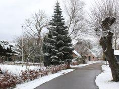 dorpsgezicht_haren-essen_130310-4864