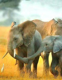 affectionate elephants