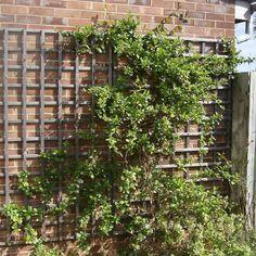 Bauanleitungen für Pflanzenkästen und Rankgerüste