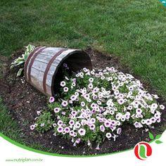 A Primavera chegou, limpe a casa, arrume o jardim, esparrame flores!
