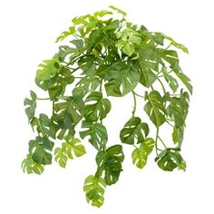Cascading Philodendron Foliage, 22'' Green Plants, Artificial Plants, Houseplants, Plant Leaves, Decoration, Herbs, Texture, Amp, Products