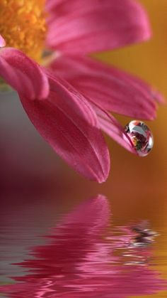 Flowers with Water Drops Wallpaper Flor Iphone Wallpaper, Flower Wallpaper, Mobile Wallpaper, Macro Flower, Flower Art, Flower Petals, Water Drop Photography, Photography Flowers, Levitation Photography