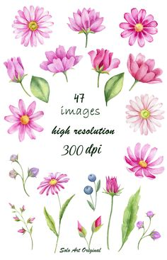 Leaf Flowers, Wild Flowers, Watercolor Flowers, Watercolor Art, Art Ballet, Flower Drawing Tutorials, Flower Clipart, Flower Doodles, Botanical Illustration