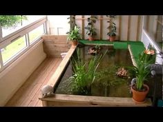 Turtle Pond - YouTube