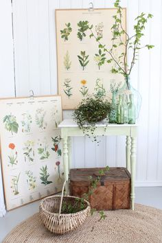 Vignette with botanical charts, green glass bottles and a potted plant -- photo: Vibeke Design