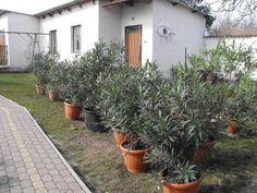 Patio, Outdoor Decor, Flowers, Gardening, Minden, Sneaker, Vans, Plant, Slippers