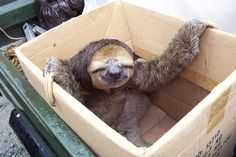 Sloth.  Why do I love it?  I have NO friggen clue.