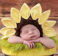 sunflower baby photosession - Google Search