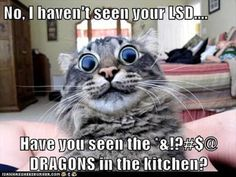 Dump A Day Attack Of The Funny Animals - 43 Pics