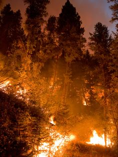 Trinity Ridge Fire, Pine and Featherville, Idaho, Boise National Forest, August, 2012; securing Rocky Bar Types Of Aesthetics, Tattoo Background, Wildland Firefighter, California Wildfires, Between Two Worlds, Fire Element, Wild Fire, World Of Color, Save The Planet