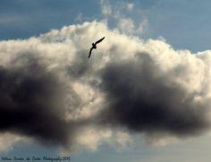 Clouds and bird, Photo credits by Helena Simões da Costa © 2015 http://helenasimoesdacosta.wix.com/helencostafotografia #sky #clouds #birds