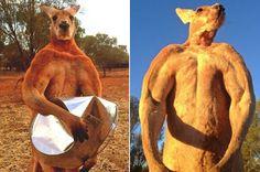 Big Strong Aussie ....All Natural .