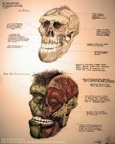 Anatomía de Hulk