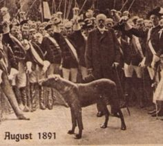 """Tyras II"" with Otto von Bismarck. A Black (or slate) Dane with white on chest and white toes."