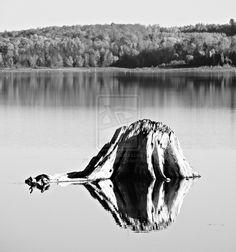 Stumpy Reflections ...