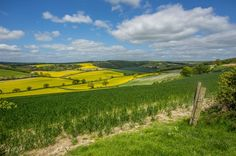 View across to Maidensgrove #Chiltern Way #Chilterns #oil seed rape #spring #view #walk #photo #photography #fliiby #images #yyazilim #people #nature