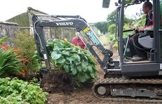 This is how to dig out a huge hosta!