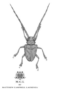 The Jeweled Garden. Longhorned Beetle: The Glutton. Sketch 1.