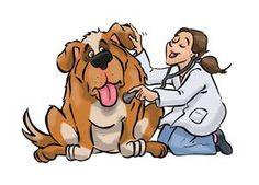 veterinaria2