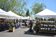 The Lane County Farmer's Market happens seasonally on Saturdays at the corners of 8th and Oak Streets.  Oregon's rich soils offer unparalleled bounty.