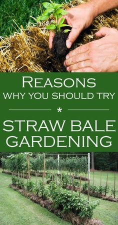 Reasons Why You Should Try Straw Bale Gardening - topGARDENtips.net