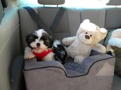 Kozmo with his new car seat ; )