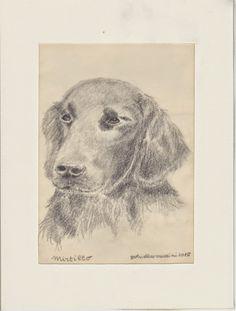 Cani in Cornice: Mirtillo (disegno matita)