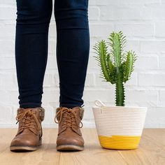 Father's Day is on Sunday and we want you to think beyond the socks and . We love the African Milk Tree for it's strong vertical lines and ease of care. Plus it's proudly South African . African Milk Tree, Want You, Houseplants, Fathers Day, Planters, Dads, Sunday, Socks, Strong