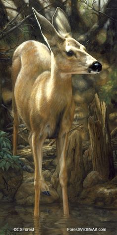 Oil painting of a young mule deer by wildlife artist Crista Forest. ForestWildlifeArt.com - Fine Art Prints starting at just $25. Notecards also available. Get them here: http://fineartamerica.com/profiles/crista-forest.html
