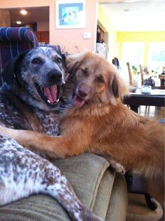 Best buddies thank you for sharing! The Davinci Foundation for Animals beautiful bonds of friendship!