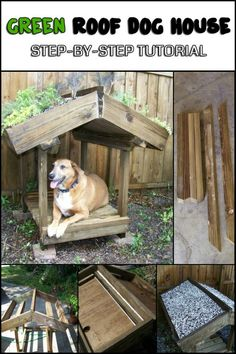 Learn How to Build a Green Roof Dog Veranda