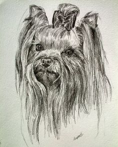 'Original Graphite Portrait of Yorkie' is going up for auction at  9am Thu, Sep 20 with a starting bid of $20.