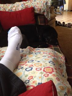 Quincy keeping her Hooman mommy company post knee surgery. Love my fur baby.