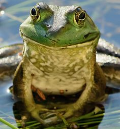 One more frog by Scott Vrana on 500px