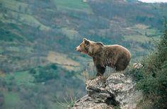 Asturias a través del ecoturismo | BolsaSpain