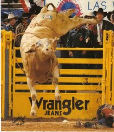 Bodacious - one of the most dangerous bulls ever in the PBR