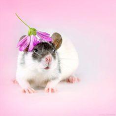Ratten sind hinterlistige kleine Biester, die Krankheiten übertragen und nichts besseres zu tun haben, als sich zwischen Bergen von Abfällen…