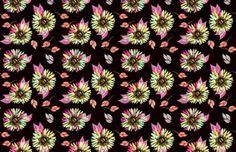 Fondos Gratis: Wallpapers de Margaritas