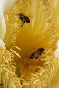 busy buzzing....