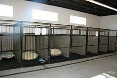 6 Great Tips for Getting Your Dog Toilet Trained Puppy Kennel, Pet Kennels, Indoor Dog Kennels, Outdoor Dog Kennel, Commercial Dog Kennel Ideas, Dog Kennel Flooring, Dog Boarding Kennels, Pet Boarding, Luxury Dog Kennels