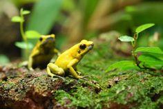 Os 5 animais mais perigosos do mundo - PeritoAnimal