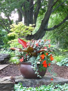 A Potted Shade Garden