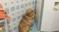 Depois de comer bolo cachorro se faz de desentendido quando leva reclamação: ift.tt/2k3fSl1