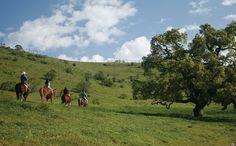 Horseback Riding in Monterey County