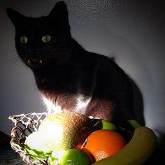 """Cette femme a une surprise de taille lorsque le chaton qu'elle a adopté se transforme en """"vampire"""" en grandissant..."""