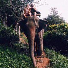 Monter sur le dos d'un éléphant